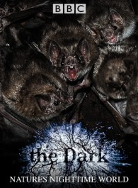 The Dark: Nature's Nighttime World